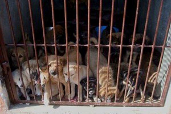 Psy, ktoré chovajú iba pre zisk, často žijú v nevyhovujúcich podmienkach, ich vlastnosti sa nekontrolovaným krížením degenerujú.