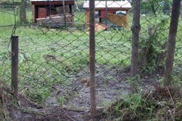 Medveď minulý týždeň rozbil úle aj v Pavčinej Lehote.
