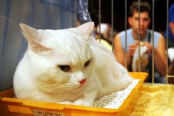 Majitelia by mali radšej dať mačku sterilizovať, ako potom mačiatka kruto likvidovať.