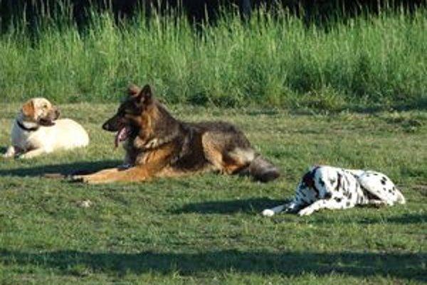 Samosprávy v liptovských mestách výcvik psov nepodporujú, majitelia vycvičených psov nie sú ani nijako zvýhodnení.