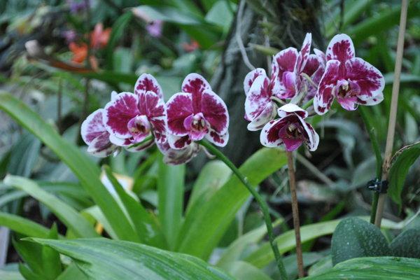 Nitra sa pýši najväčšou zbierkou orchideí na Slovensku.