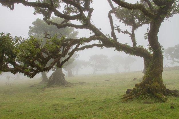 Vavrínový les