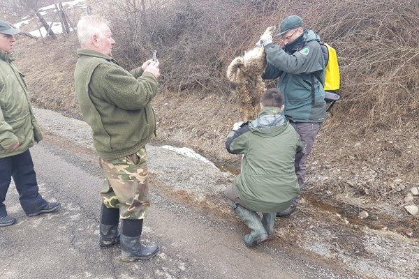 Zrazené zviera priviedlo na miesto zástupcov poľovníckeho združenia, ochranárov i úradníkov.