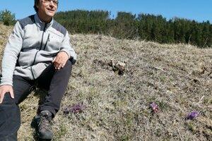 Práca ochranárov sa vyplatila, pribudli nové trsy kvetov. Približuje Tomáš Dražil.