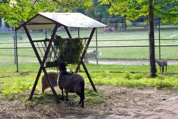 Viaceré zvieratá v parku ešte nemajú svoje mená.
