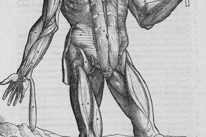 Tretia časť sa zaoberala žilami a tepnami. Štvrtá zachytávala nervový systém.
