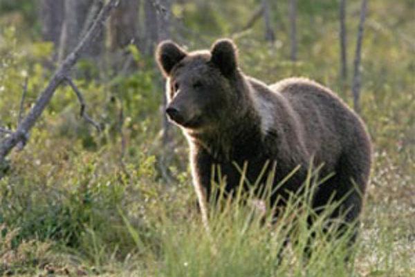 Podľa veterinára Jaroslava Čermáka ide zrejme o mladého medveďa hnedého.