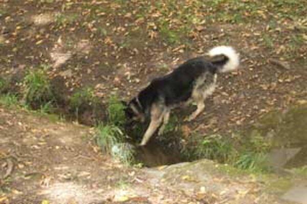 V čase našej návštevy sme aj my v mestskom parku zbadali voľne pobehujúce psa. Pravdepodobne išlo o tuláka bez domova. Do parku sa môžu vodiť psy len na obojku a s náhubkom.