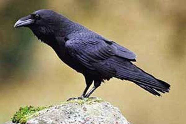 Hromadný výskyt vtákov v kŕdľoch vzbudzuje u ľudí často dojem premnoženia.