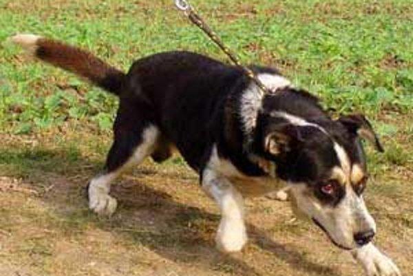 Väčšina majiteľov psov v Lučenci Všeobecné záväzné nariadenie mesta nerešpektuje.