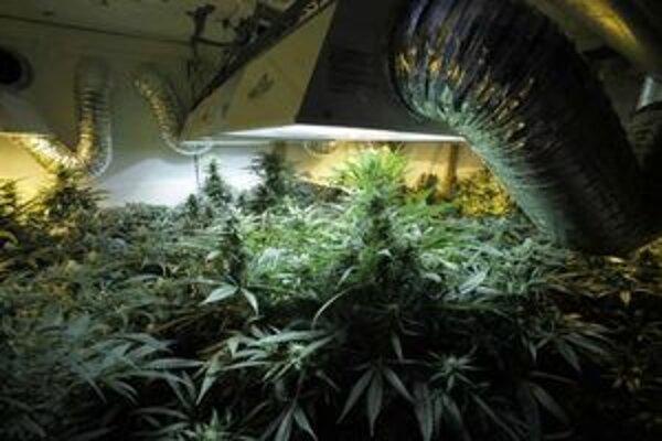Polícia zaistila okrem rastlín a drogy aj dve laboratóriá s osvetlením, zavlažovaním a ventilátormi.