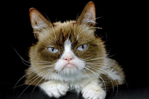 Grumpy cat počas fotenia v roku 2015.
