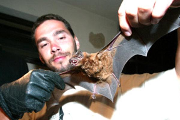 Jeden netopier dokáže skonzumovať až tritisíc komárov za jedinú noc.