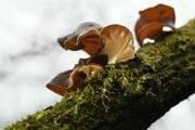 Ilustračná fotografia - Dnešné huby sa mohli vyvinúť z druhu, ktorý sa objavil pred miliardou rokov.