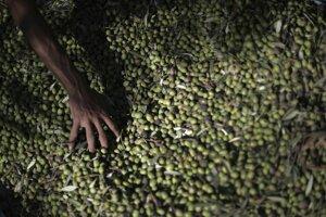 Nočný zber olív kombajnami spôsobuje v stredomorí každoročne smrť miliónov sťahovavých vtákov.