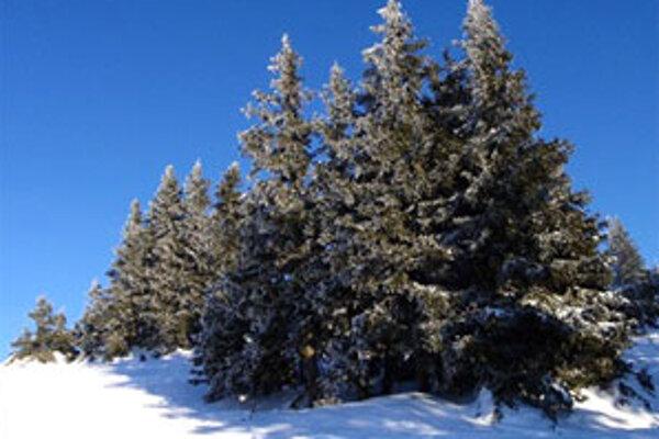 """""""V diaľke pred nami bolo vojnové peklo, pri nás boli stromčeky, symboly vianočnej pohody. Paradox tej doby,"""" tvrdí dôchodca."""
