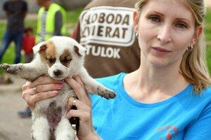 Podľa odhadu regionálneho centra Slobody zvierat je v osade minimálne 200 psov.