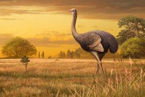 Umelecká predstava o objavenom gigantickom vtákovi z východnej Európy.