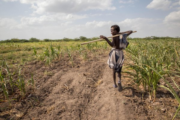 Extrémne suchá ohrozujú v Etiópii milióny ľudí.