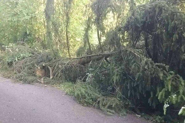 V kraji zväčša odstraňovali hasiči následky spadnutých stromov.