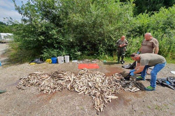 Škody sú obrovské. Podľa ichtyológa môže trvať niekoľko rokov, kým sa Hron na tomto úseku vráti do normálu.