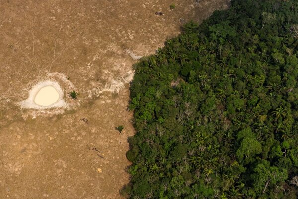 Bujný les vedľa poľa, ktoré sa využíva na pasenie dobytka neďaleko Porto Velho v Brazílii.