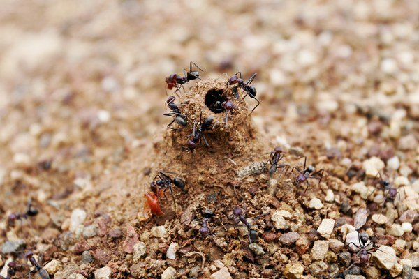 Aj mravce poznajú kariérny postup.