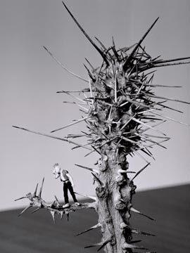 petranova-panko-na-kaktuse.jpg