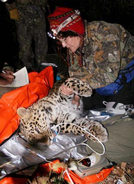 leopardica3.jpg