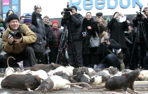 potkany-ukrajina_reuters.jpg