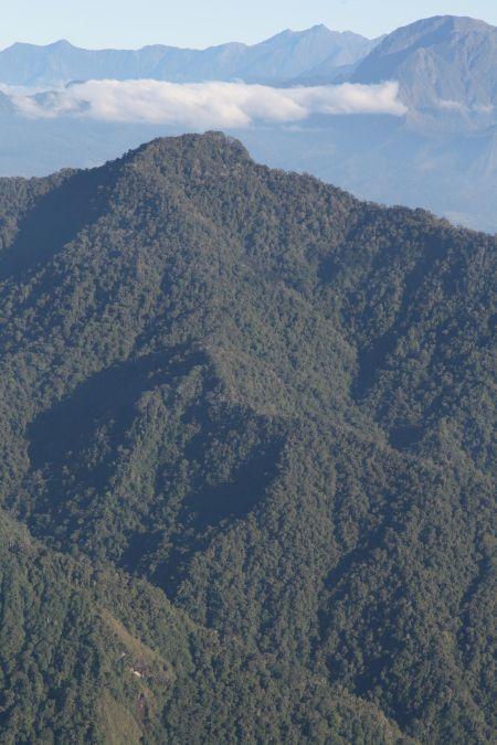 stromove_kengury3.jpg