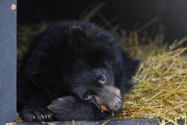 Budú medvede kľúčom k budúcim vesmírnym letom?
