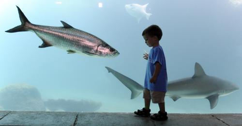 akvarium.ap.jpg