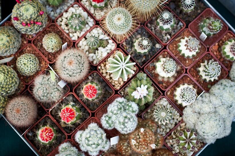 kaktus5-820.jpg