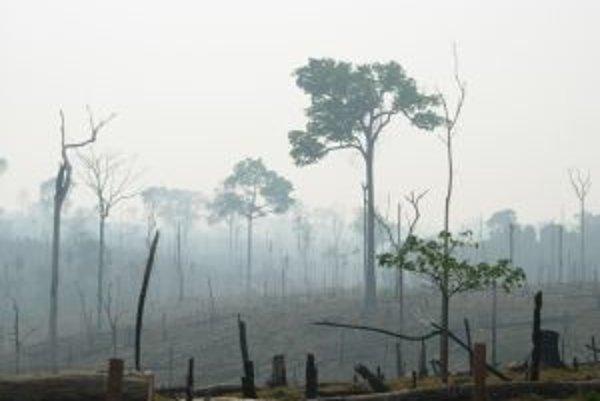 """V brazílskej Amazónii sa každoročne vyrúbe 1,8 milióna hektárov dažďového pralesa - je to takmer tretina celosvetového rozsahu tropického odlesňovania. Strata pralesa má závažné negatívne dôsledky všade, ale tu zarezáva priamo do """"zelených pľúc planéty""""."""