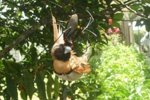 Fotografie vtáka uviaznutého v sieti obrovského pavúka tento týždeň kolovali po internete.