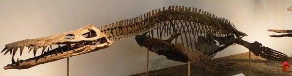 liopleurodon_ferox_tubingen_2_r8500_res.jpg