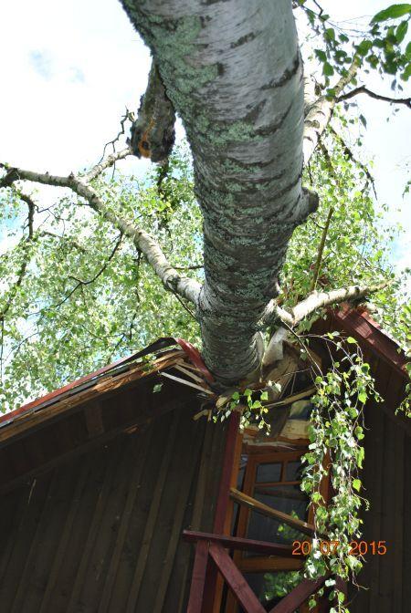breza2_450.jpg