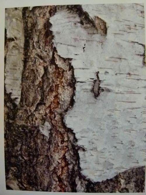 brezy-tvar.jpg