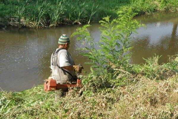 Koryto Handlovky už v posledných rokoch pravidelne kosia pracovníci vodohospodárskeho podniku.