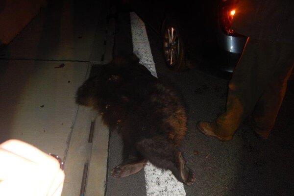 Medveď na ceste uhynul.