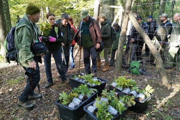 Ochranári spolu s lesníkmi vysadili 800 sadeníc duba zimného.
