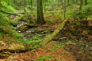 Karpatské bukové pralesy.