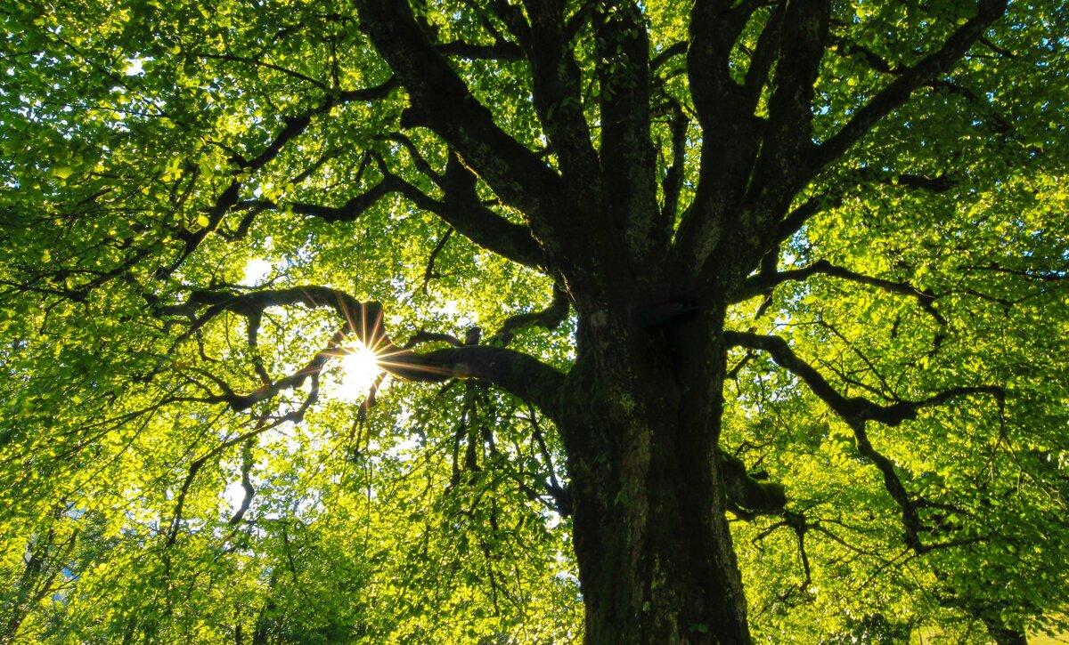 rýchlosť datovania Sherwood Park