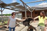 Kontaktná zoo pri Liptovskom mikuláči