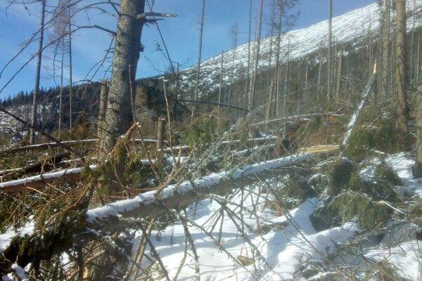 Popadané stromy v TANAP-e.