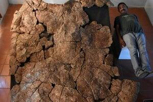 Paleontológ Rodolfo Sánchez leží pri 2,4 metra dlhom pacieri korytnačky Stupendemys geographicus. Vľavo hore jasne vidno jeden z dvoch rohov, ktorými sa vyznačovali samce.