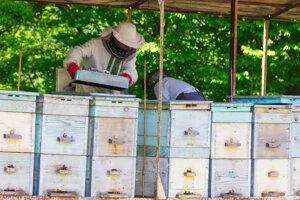 Aj ruské včely sa musia riadiť zákonmi, ktoré pre ne pripravujú v ruskej dume.