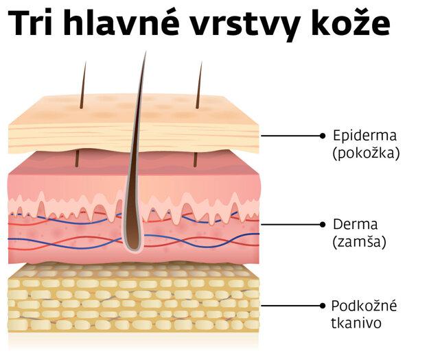 Zjednodušený prierez ľudskou kožou.