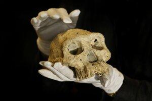 Ilustračná snímka lebky človeka vzpriameného. Nová štúdia naznačuje, že s vyhynutým druhom človeka sa mohol páriť spoločný predok moderných ľudí, neandertálcov a denisovanov.